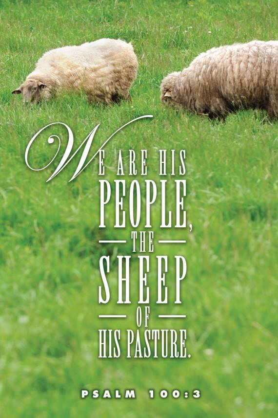 sheep_7652c